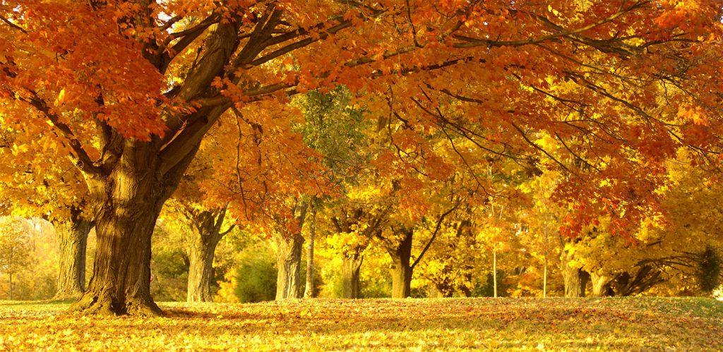 ป่าสีเหลือง