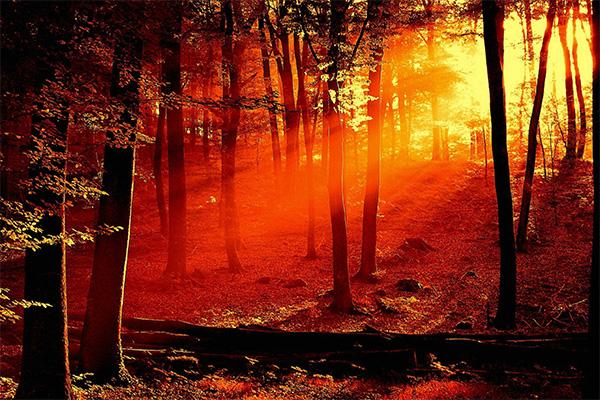 ความสวยงามของป่าในยามพระอาทิตย์ตก